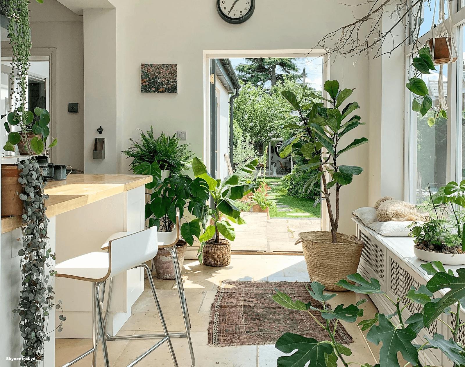 Đặt cây xanh trong phòng để điều hoà không khí
