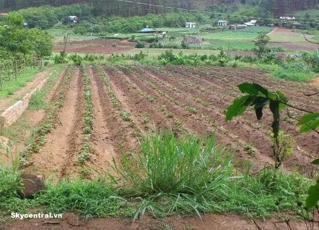 Đất không có tranh chấp thì mới được phép chuyển nhượng.